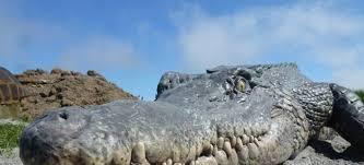 Dinosaurs Visit Bornholm